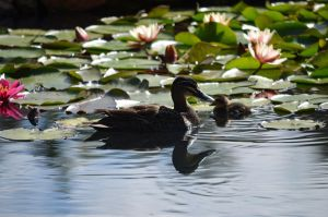 Mother and Duckling by A-Sped-Kid