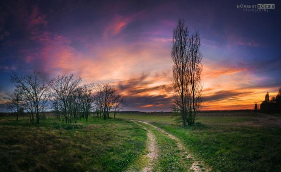 So farewell in March by NorbertKocsis