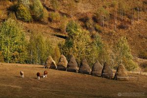 Autumn colors in Apuseni Mountains 26 by adypetrisor