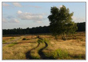 Evening on the heath by jchanders