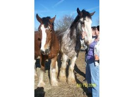 Abe And Ducan Clydesdales by ArtisinmyHeart
