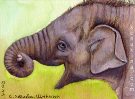 ACEO Baby Elephant by sschukina