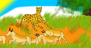 the cheetahs hunt by pottenuss