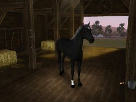 Sims3 APets BLACK BEAUTY Creation by Senwolf10