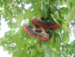 Shoes In The Trees by TangledInInk