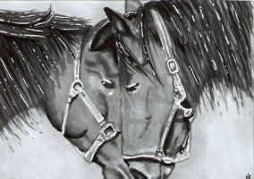 Horses - ACEO by Sofera