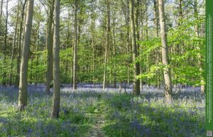 Glades of Blue 07 UNRESTRICTED by Elandria