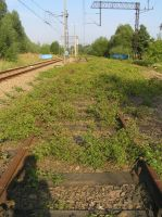 Bushes on Tracks by michal1995