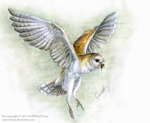 Barn-owl by VinceSwift
