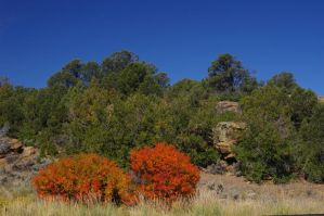 Fall Colors by PatGoltz