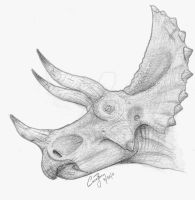 Triceratops by BlueCea
