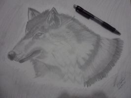 Realistic Wolf by libregon
