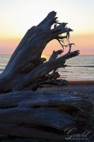 Driftwood Rialto by ThisWomanWanders