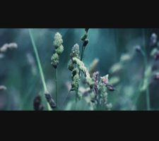 thing about plant by lafaette