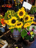 flowershop by Wonderer1000