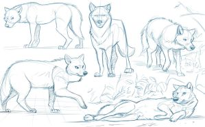 Wolf Studies by Temiree