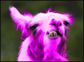 Pink Kawaii Llama by Creativetasks