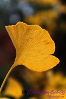 Ginkgo in Autumn by Miss-Whoa-Back-Off