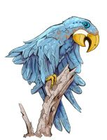Blue Macaw by Avangion