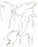 Fox Sketches by Joava