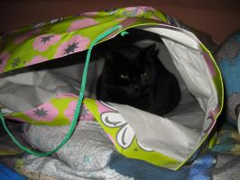 my cat in a bag by TwoEye