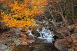 Autumn Splendor by EvaMcDermott