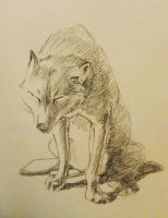 Sad Wolf by 4MUSE