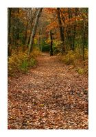 Autumn Path by TrappedChild