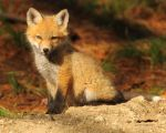 Pose in the sunshine by natureguy