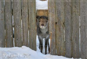I'm totally watching you by Triumfa