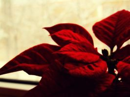 red flower by andr33aa