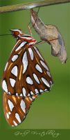 Photo - Gulf Fritillary by emailandthings