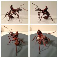Ant Rider by SculptorScotty