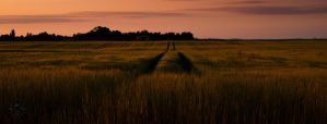 fields of the setting sun 02 by Katyma