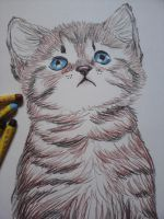 Crayon Cat by Cindy-R