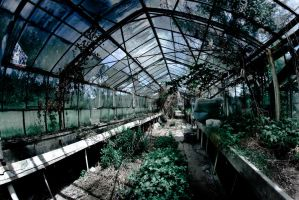 abandoned glasshouses by WilhelmBielawa