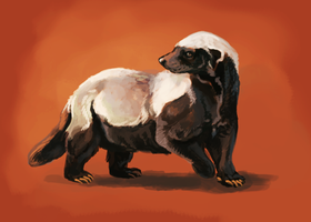 Honey Badger speed paint by thornwolf