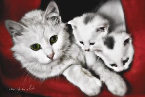 cat family by ayaz-yildiz