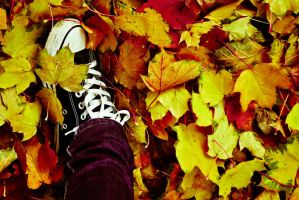 Step into autumn by ladycornicula