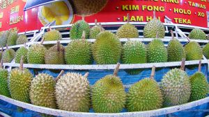 Durian: The King Of Fruits - 2 by AbbyShue