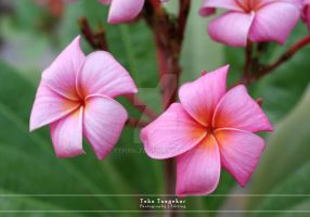 Colors of Life 4 by ttpixelzz