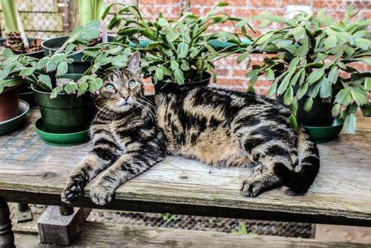Springtime Lounging by Kitteh-Pawz