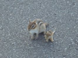 Baby chipmunk and his mom by MajicWish