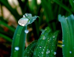 Watery Plant by Ym2d