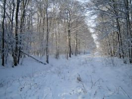 Snowy woods No.5 by redrockstock
