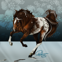 Howrse Coat Appaloosa by Darya87
