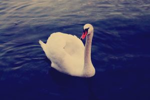 swan by LurchiMone