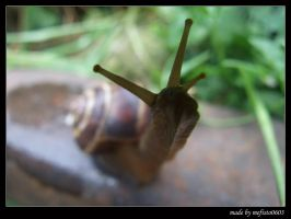 curious snail by mefisto0603
