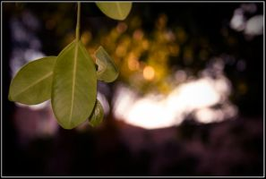 .green leaves. by afron
