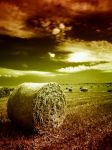 Welcome to Hay Ball by edinek